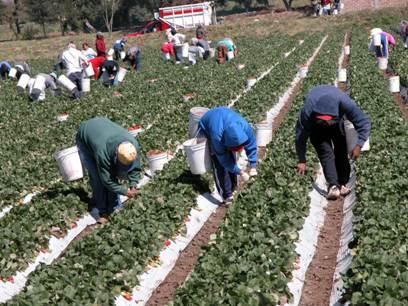 Jornaleros Agrícolas Migrantes: Viajeros sin Futuro