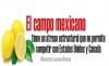 El campo mexicano tiene un atraso estructural que no permite competir con Estados Unidos y Canadá