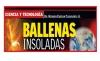 CIENCIA Y TECNOLOGÍA Ballenas insoladas