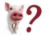 Calderón se prestó a la gran estafa con la Gripa Porcina