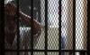 El arraigo en el sistema  jurídico penal mexicano